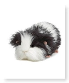 Cookies N Cream Guinea Pig 8 5 Plush
