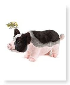 Buy Now Signature Pot Bellied Pig